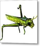 Insect Spy, Conceptual Artwork Metal Print