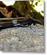 Insect Stripes Metal Print