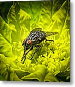 Insect Up Close - Summer Fly Sunbathing On A Yellow Perennial Garden Plant - Macro Photography Metal Print
