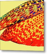 Insect Wing Study Metal Print