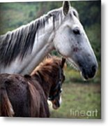 Instinct Of Love Metal Print by Karen Wiles