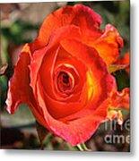 Intense Rose Metal Print