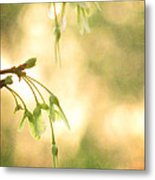 Interlude Metal Print