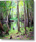 Into The Swamp Metal Print