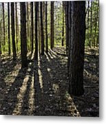Into The Woods Spnc Michigan Metal Print