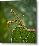 Invasion Of The Insect Snatcher Metal Print by Michael Putnam