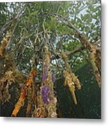 Invertebrate Life Growing On The Roots Metal Print by Tim Laman