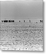 Iraqi Soldiers Surrender To The 1st Metal Print
