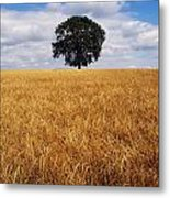 Ireland, Barley Field With Oak Tree Metal Print