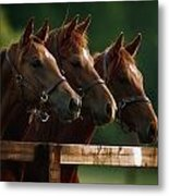 Ireland Thoroughbred Horses Metal Print