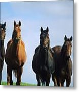 Ireland Thoroughbred Yearlings Metal Print