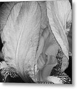 Iris 2 In Black And White Metal Print