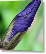 Iris And Friend Metal Print