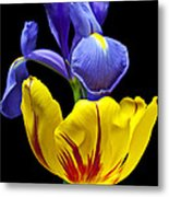 Iris And Tulip Metal Print