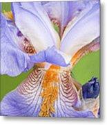 Iris Close Up Blue And Gold Metal Print