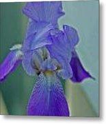 Iris I Metal Print