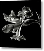 Iris In Black And White Metal Print