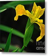 Iris In Yellow Metal Print