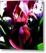 Iris Inner Beauty Metal Print
