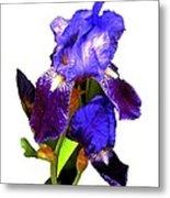 Iris On White Metal Print