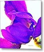 Iris Surprise  Metal Print