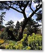 Irish National Botanic Gardens, Dublin Metal Print