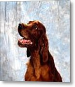 Irish Red Setter Metal Print