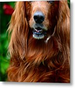 Irish Setter I Metal Print by Jenny Rainbow