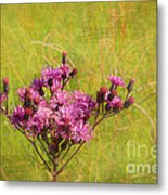 Ironweed In Autumn Metal Print