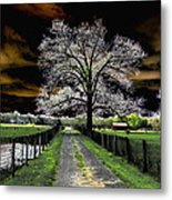 Isolated Metal Print