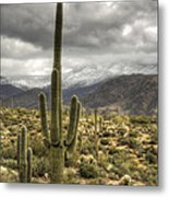 It Does Snow In The Desert Metal Print