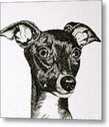 Italian Greyhound Metal Print