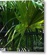 Its Pretty And Tropical In Key West  Metal Print