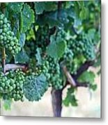 Jackson Triggs Winery 2 Metal Print