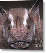 Jamaican Fruit Bat Metal Print