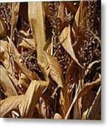 Jammer Corn Abstract 001 Metal Print