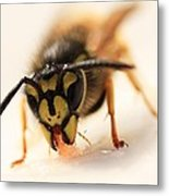Jammy Wasp Metal Print