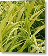 Japanese Forest Grass Metal Print