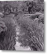 Japanese Garden With Irises Metal Print