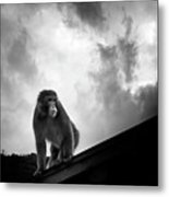 Japanese Macaque On Roof Metal Print by By Daniel Franco