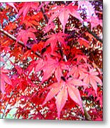 Japanese Maple Leaves 11 In The Fall Metal Print