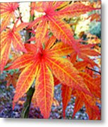 Japanese Maple Leaves 13 In The Fall Metal Print