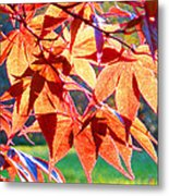 Japanese Maple Leaves 6 In The Fall Metal Print