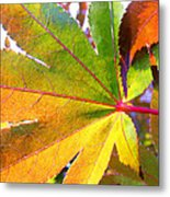 Japanese Maple Leaves 7 In The Fall Metal Print
