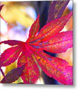 Japanese Maple Leaves In The Fall Metal Print