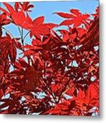 Japanese Maple Metal Print