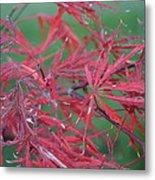 Japanese Red Leaf Maple Hybrid Metal Print