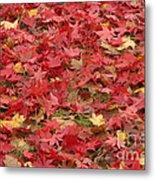 Japanese Red Maple Leaves Metal Print
