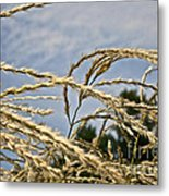 Japanese Silver Grass Metal Print