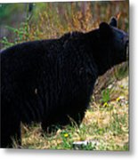 Jasper - Black Bear Metal Print